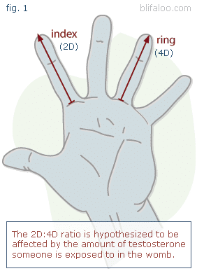 digit ratio diagram